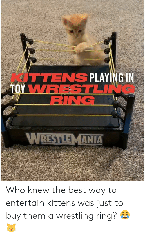 Kittens: ITTENS PLAYING IN  TOY WRESTLIN  RING  WRESTLEMANIA Who knew the best way to entertain kittens was just to buy them a wrestling ring? 😂🐱