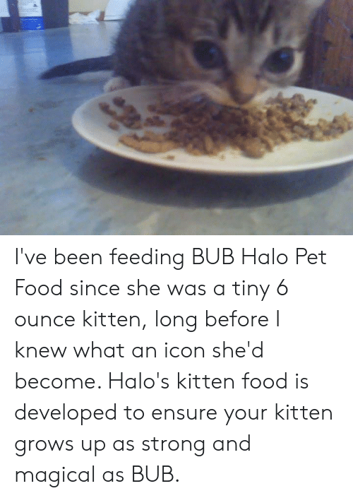 Ensure: I've been feeding BUB Halo Pet Food since she was a tiny 6 ounce kitten, long before I knew what an icon she'd become. Halo's kitten food is developed to ensure your kitten grows up as strong and magical as BUB.
