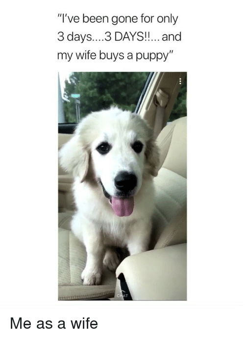 "Puppy, Girl Memes, and Wife: ""I've been gone for only  3 days....3 DAYS!!... and  my wife buys a puppy'"" Me as a wife"
