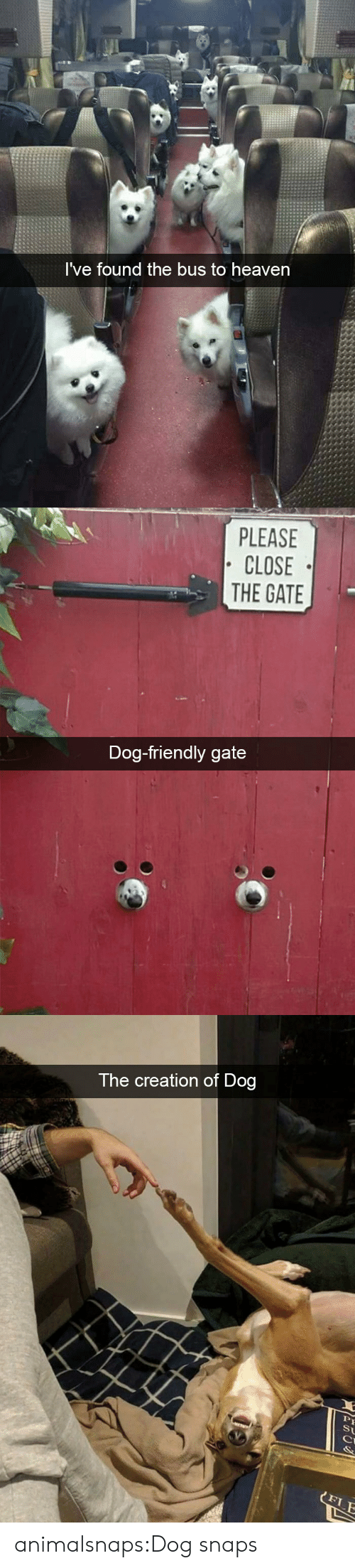 creation: I've found the bus to heaven   PLEASE  CLOSE  THE GATE  Dog-friendly gate   The creation of Dog  St  FLE animalsnaps:Dog snaps