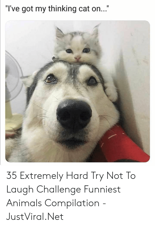 "Ive Got My Thinking Cat On: ""I've got my thinking cat on..."" 35 Extremely Hard Try Not To Laugh Challenge Funniest Animals Compilation - JustViral.Net"