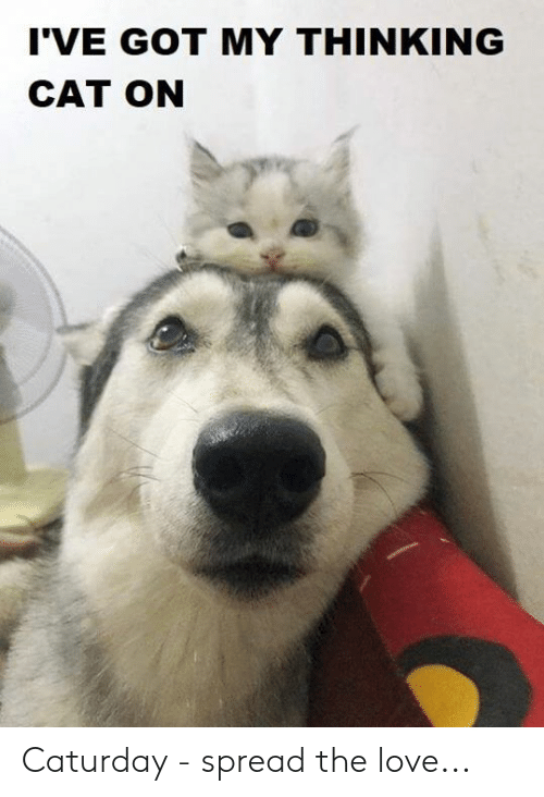 Thinking Cat: I'VE GOT MY THINKING  CAT ON Caturday - spread the love...