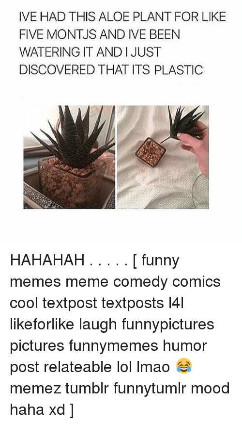 Funny, Lmao, and Lol: IVE HAD THIS ALOE PLANT FOR LIKE  FIVE MONTJS AND IVE BEEN  WATERING IT AND I JUST  DISCOVERED THAT ITS PLASTIC HAHAHAH . . . . . [ funny memes meme comedy comics cool textpost textposts l4l likeforlike laugh funnypictures pictures funnymemes humor post relateable lol lmao 😂 memez tumblr funnytumlr mood haha xd ]