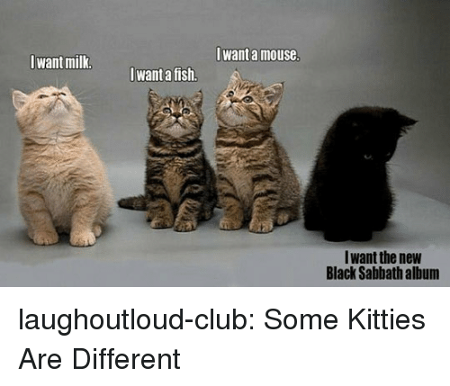 Kitties: Iwant a mouse  Iwant milk  want a fish.  Iwant the new  Black Sabbath album laughoutloud-club:  Some Kitties Are Different