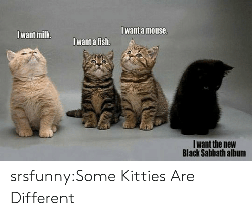 Kitties: Iwant a mouse  Iwant milk  want a fish.  Iwant the new  Black Sabbath album srsfunny:Some Kitties Are Different