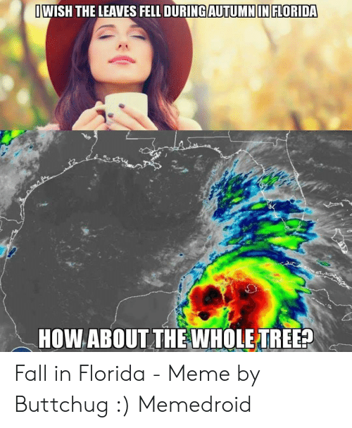 Fall In Florida: IWISH THE LEAVES FELL DURING AUTUMNIN FLORIDA  HOW ABOUT THEWHOLE TREE? Fall in Florida - Meme by Buttchug :) Memedroid