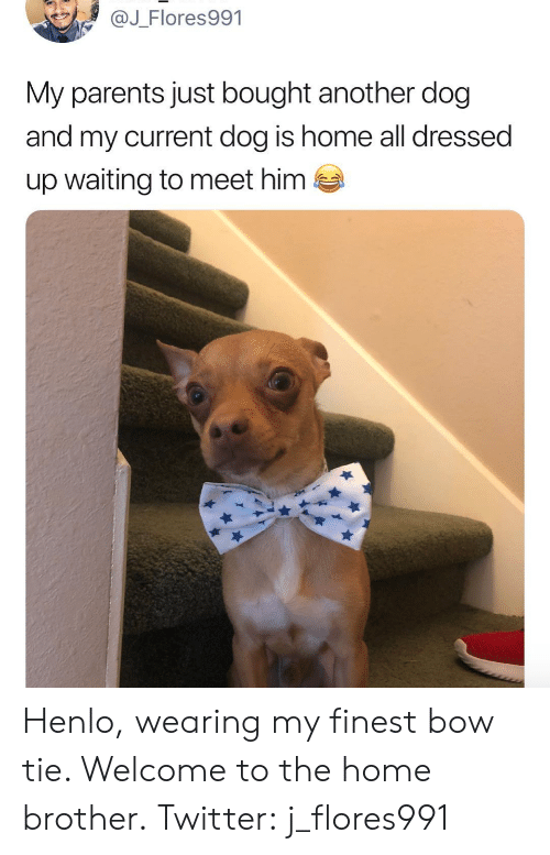 Henlo: @J_Flores991  My parents just bought another dog  and my current dog is home all dressed  up waiting to meet him  es Henlo, wearing my finest bow tie. Welcome to the home brother.Twitter: j_flores991