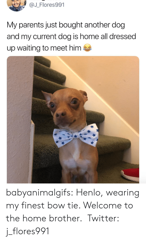 Henlo: @J_Flores991  My parents just bought another dog  and my current dog is home all dressed  up waiting to meet him  es babyanimalgifs: Henlo, wearing my finest bow tie. Welcome to the home brother. Twitter: j_flores991