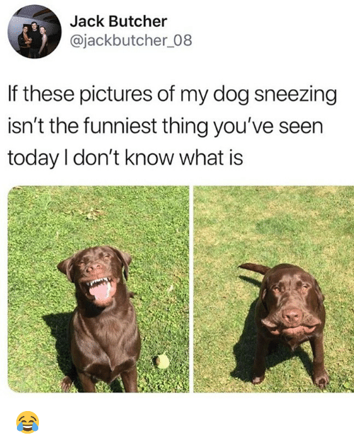 Memes, Pictures, and Today: Jack Butcher  @jackbutcher_08  If these pictures of my dog sneezing  isn't the funniest thing you've seen  today l don't know what is 😂