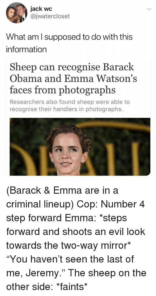 """Obama, Barack Obama, and Information: jack wc  @jwatercloset  What aml supposed to do with this  information  Sheep can recognise Barack  Obama and Emma Watson's  faces from photographs  Researchers also found sheep were able to  recognise their handlers in photographs. (Barack & Emma are in a criminal lineup) Cop: Number 4 step forward Emma: *steps forward and shoots an evil look towards the two-way mirror* """"You haven't seen the last of me, Jeremy."""" The sheep on the other side: *faints*"""