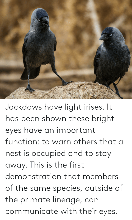 bright eyes: Jackdaws have light irises. It has been shown these bright eyes have an important function: to warn others that a nest is occupied and to stay away. This is the first demonstration that members of the same species, outside of the primate lineage, can communicate with their eyes.