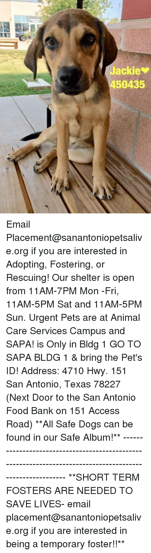 bringed: Jackie  450435 Email Placement@sanantoniopetsalive.org if you are interested in Adopting, Fostering, or Rescuing!  Our shelter is open from 11AM-7PM Mon -Fri, 11AM-5PM Sat and 11AM-5PM Sun.  Urgent Pets are at Animal Care Services Campus and SAPA! is Only in Bldg 1 GO TO SAPA BLDG 1 & bring the Pet's ID! Address: 4710 Hwy. 151 San Antonio, Texas 78227 (Next Door to the San Antonio Food Bank on 151 Access Road)  **All Safe Dogs can be found in our Safe Album!** ---------------------------------------------------------------------------------------------------------- **SHORT TERM FOSTERS ARE NEEDED TO SAVE LIVES- email placement@sanantoniopetsalive.org if you are interested in being a temporary foster!!**