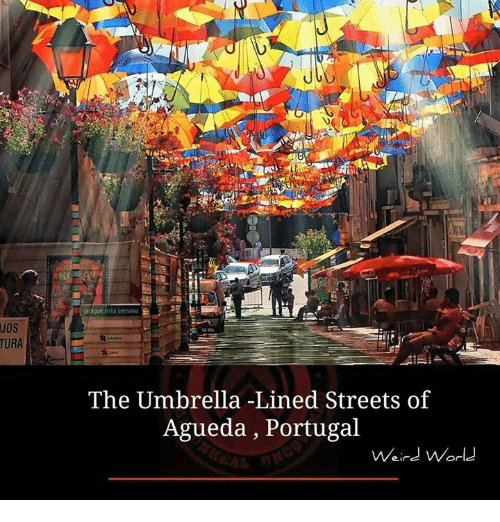 Memes, Streets, and Weird: jackpot esta semana  JOs  The Umbrella -Lined Streets of  Agueda , Portugal  Weird World