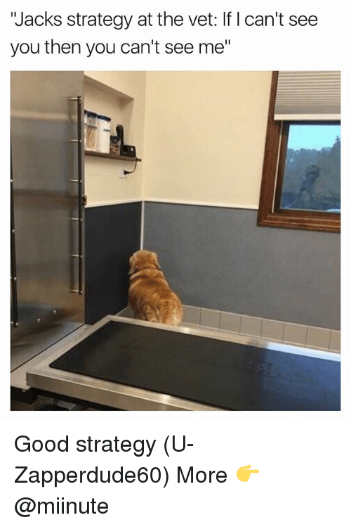 """Funny, Good, and Strategy: Jacks strategy at the vet: If I can't see  you then you can't see me"""" Good strategy (U-Zapperdude60) More 👉 @miinute"""