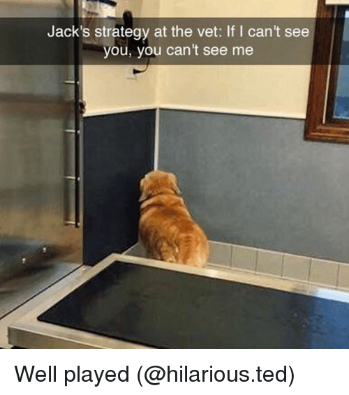 Funny, Ted, and Hilarious: Jack's strategy at the vet: If I can't see  you, you can't see me  l mant ce Well played (@hilarious.ted)