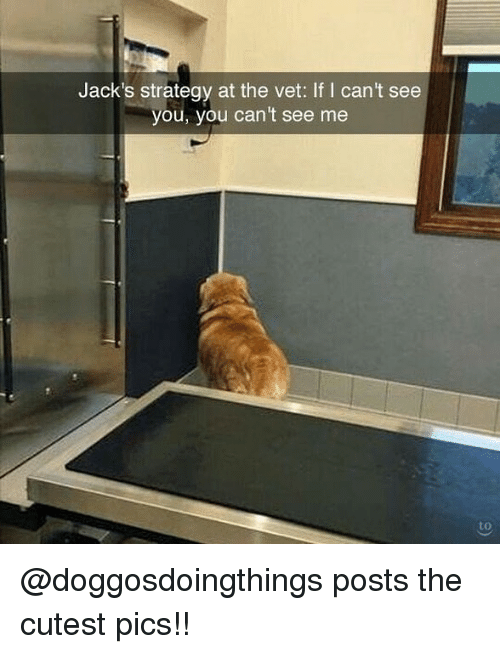 Memes, 🤖, and Strategy: Jack's strategy at the vet: If I can't see  you, you can't see me  to @doggosdoingthings posts the cutest pics!!