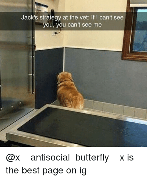 Memes, Best, and Butterfly: Jack's strategy at the vet: If I can't see  you, you can't see me @x__antisocial_butterfly__x is the best page on ig