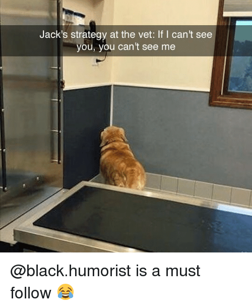 Memes, Black, and 🤖: Jack's strategy at the vet: If I can't see  you, you can't see me @black.humorist is a must follow 😂