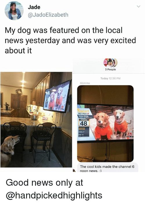 Memes, News, and Cool: Jade  @JadoElizabeth  My dog was featured on the local  news yesterday and was very excited  about it  3 People  Today 12:36 PM  Momma  PET PICs a  와 25  48  CHILLY  NW 10  The cool kids made the channel 6  noon news. :) Good news only at @handpickedhighlights