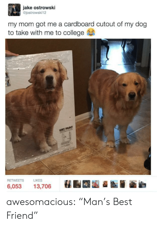 """Cutout: jake ostrowski  @jostrowski12  my mom got me a cardboard cutout of my dog  to take with me to college  RETWEETS  LIKES  6,053 13,706 awesomacious:  """"Man's Best Friend"""""""