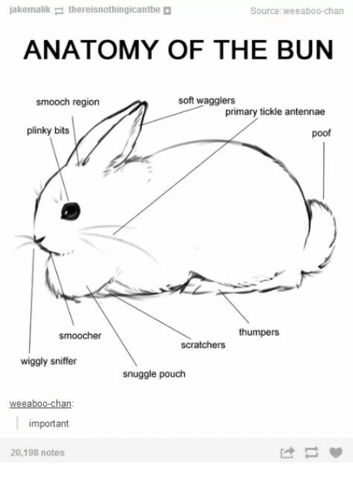 Chanli: jakemalikthereisnothingicantbe  Source: weeaboo-chan  ANATOMY OF THE BUN  smooch region  soft wagglers  primary tickle antennae  plinky bits  poof  smoocher  scratchers thumpers  wiggly sniffer  snuggle pouch  important  20,198 notes