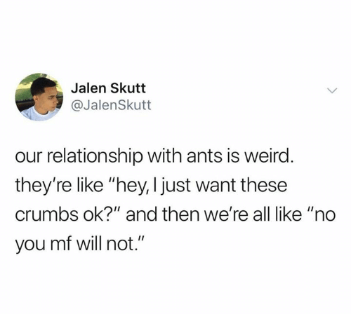 "Ants: Jalen Skutt  @JalenSkutt  our relationship with ants is weird.  they're like ""hey, I just want these  crumbs ok?"" and then we're all like ""no  you mf will not."""