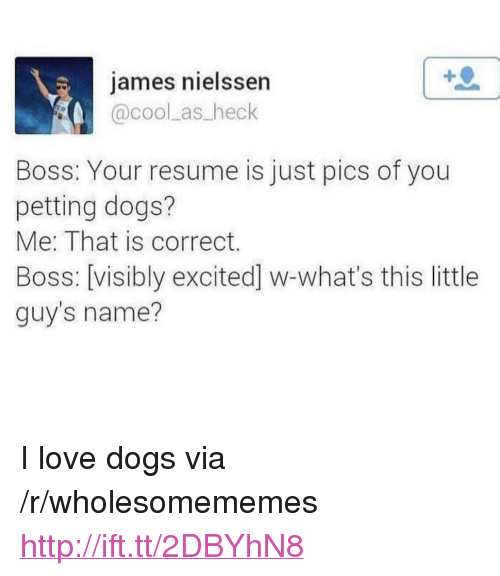 """Dogs, Love, and Cool: james nielssen  @cool as heck  Boss: Your resume is just pics of you  petting dogs?  Me: That is correct.  Boss: [visibly excited] w-what's this little  guy's name? <p>I love dogs via /r/wholesomememes <a href=""""http://ift.tt/2DBYhN8"""">http://ift.tt/2DBYhN8</a></p>"""