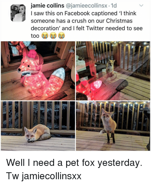 Captioned: jamie collins @jamieecollinsx.1d  I saw this on Facebook captioned 'l think  someone has a crush on our Christmas  decoration' and I felt Twitter needed to see Well I need a pet fox yesterday. Tw jamiecollinsxx