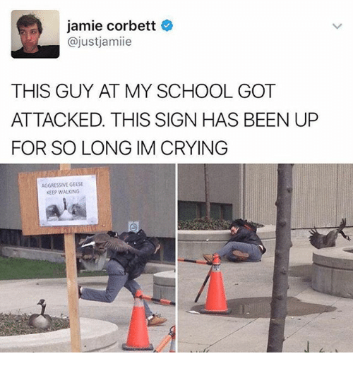 Crying, Funny, and School: jamie Corbett  ajust jamie  THIS GUY AT MY SCHOOL GOT  ATTACKED. THIS SIGN HAS BEEN UP  FOR SO LONG IM CRYING  AGGRESSIVE GEESE  KEEP WALKING