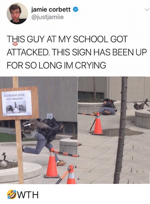 Jamie Corbett: jamie corbett  @justjamiie  THIS GUY AT MY SCHOOL GOT  ATTACKED. THIS SIGN HAS BEEN UP  FOR SO LONG IM CRYING  AGGRESSIVE GEESE  KEEP WALKING 🤣WTH