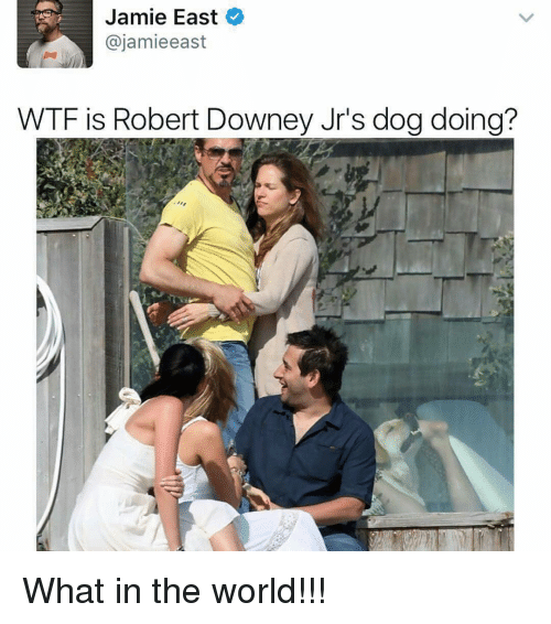 Jami: Jamie East  ajamieeast  WTF is Robert Downey Jr's dogdoing? What in the world!!!
