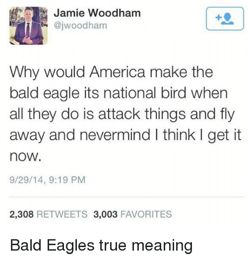 nevermind: Jamie Woodham  @jwoodham  1  Why would America make the  bald eagle its national bird when  all they do is attack things and fly  away and nevermind I think I get it  now.  9/29/14, 9:19 PM  2,308 RETWEETS 3,003 FAVORITES Bald Eagles true meaning