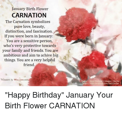 """Memes, Happy Birthday, and Flower: January Birth Flower  CARNATION  The Carnation symbolizes  pure love, beauty,  distinction, and fascination.  If you were born in January:  You are a sensitive person,  who's very protective towards  your family and friends. You are  ambitious and aim to achive big  things. You are a very helpful  friend.  Wallpapers by wALLcoo.coM  Images Quotes  Funny Good Morning com/Daily Smiles """"Happy Birthday""""  January Your Birth Flower  CARNATION"""