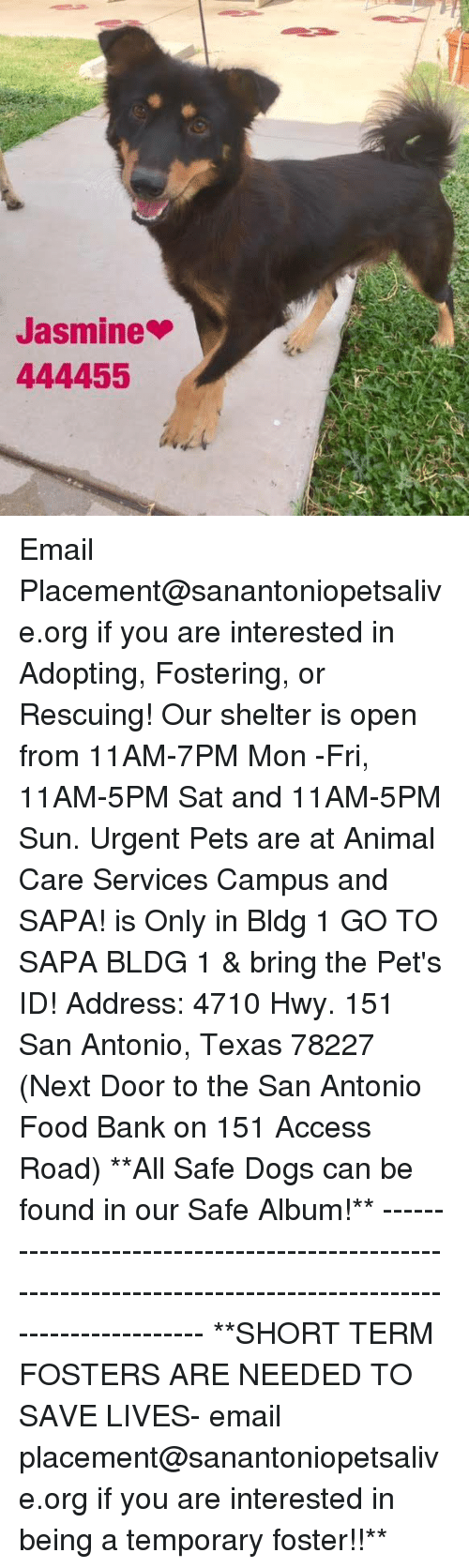 Dogs, Food, and Memes: Jasmine  444455 Email Placement@sanantoniopetsalive.org if you are interested in Adopting, Fostering, or Rescuing!  Our shelter is open from 11AM-7PM Mon -Fri, 11AM-5PM Sat and 11AM-5PM Sun.  Urgent Pets are at Animal Care Services Campus and SAPA! is Only in Bldg 1 GO TO SAPA BLDG 1 & bring the Pet's ID! Address: 4710 Hwy. 151 San Antonio, Texas 78227 (Next Door to the San Antonio Food Bank on 151 Access Road)  **All Safe Dogs can be found in our Safe Album!** ---------------------------------------------------------------------------------------------------------- **SHORT TERM FOSTERS ARE NEEDED TO SAVE LIVES- email placement@sanantoniopetsalive.org if you are interested in being a temporary foster!!**