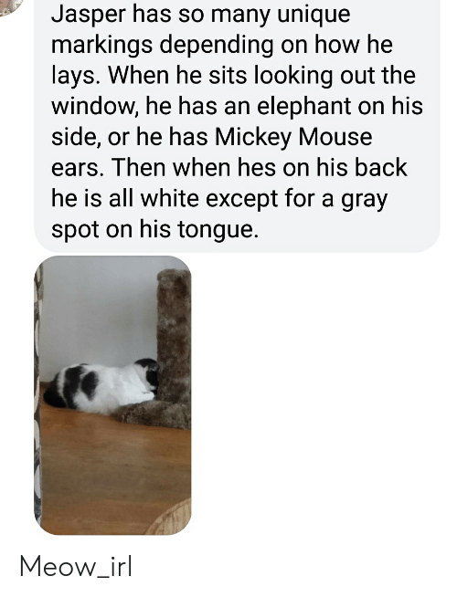 Lay's, Elephant, and Mickey Mouse: Jasper has so many unique  markings depending on how he  lays. When he sits looking out the  window, he has an elephant on his  side, or he has Mickey Mouse  ears. Then when hes on his back  he is all white except for a gray  spot on his tongue. Meow_irl
