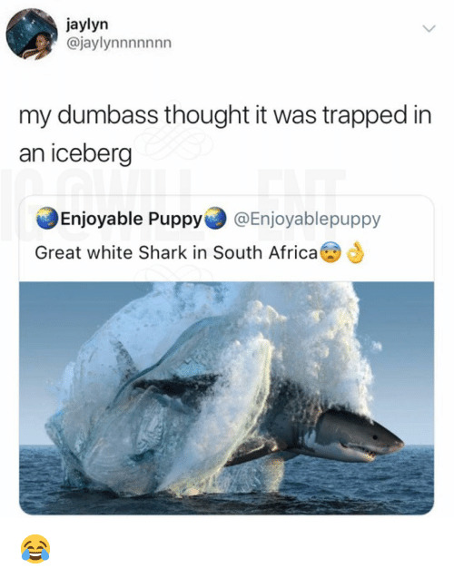 Africa, Memes, and Shark: jaylyn  @jaylynnnnnnn  my dumbass thought it was trapped in  an iceberg  Enjoyable Puppy @Enjoyablepuppy  Great white Shark in South Africa 😂
