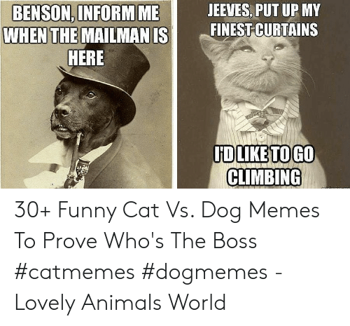 funny cat: JEEVES, PUT UP MY  BENSON, INFORM  WHEN THE  ME  MAILMAN ISI mEİNESİCURTAINS  HERE  HDLIKETOGO  CLIMBING 30+ Funny Cat Vs. Dog Memes To Prove Who's The Boss #catmemes #dogmemes - Lovely Animals World