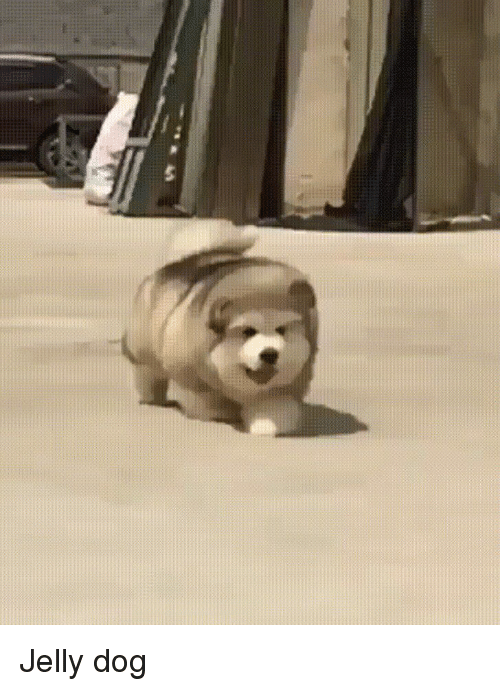 Omg, Dog, and Jelly: Jelly dog