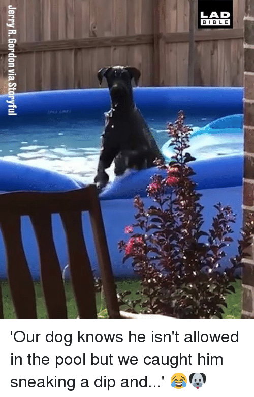 Dank, Pool, and 🤖: Jerry R. Gordon via Storyful 'Our dog knows he isn't allowed in the pool but we caught him sneaking a dip and...' 😂🐶