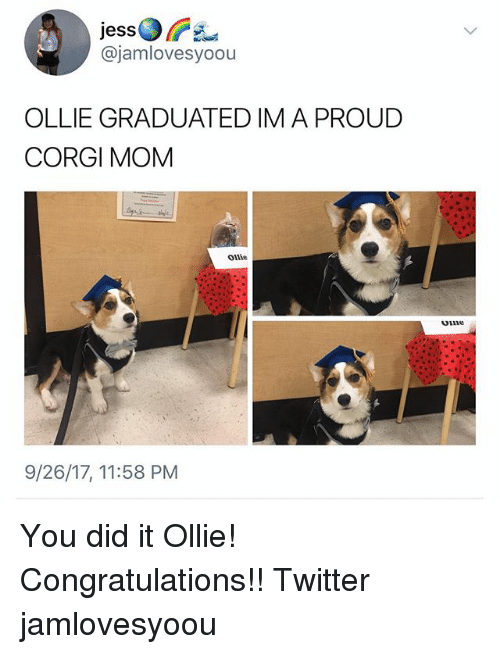 Corgi, Memes, and Twitter: jess  @jamlovesyoou  OLLIE GRADUATED IMA PROUD  CORGI MOM  Ollie  oiine  9/26/17, 11:58 PM You did it Ollie! Congratulations!! Twitter jamlovesyoou