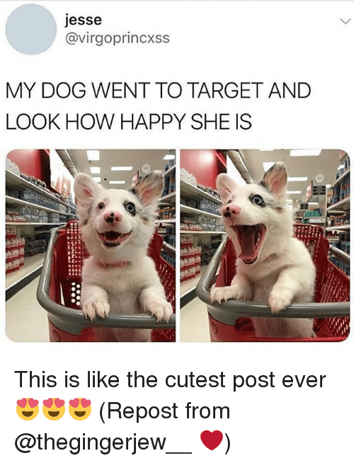 Target, Happy, and Girl Memes: jesse  @virgoprincxss  MY DOG WENT TO TARGET AND  LOOK HOW HAPPY SHE IS This is like the cutest post ever 😍😍😍 (Repost from @thegingerjew__ ❤️)