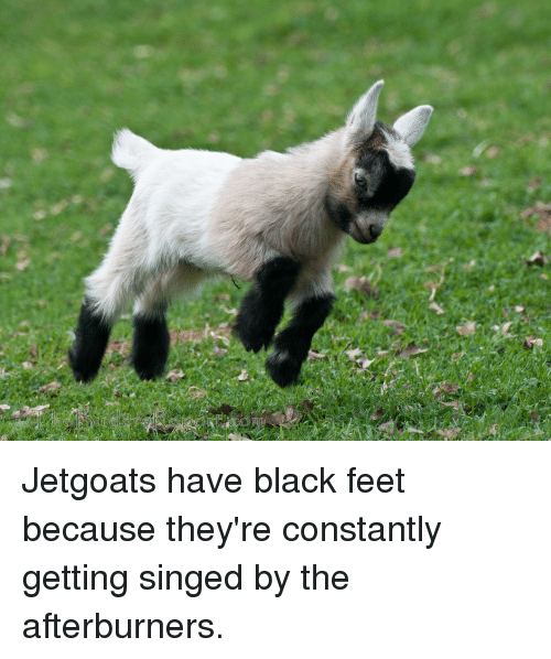 jetgoats have black feet because theyre constantly getting singed by 22037435 jetgoats have black feet because they're constantly getting singed