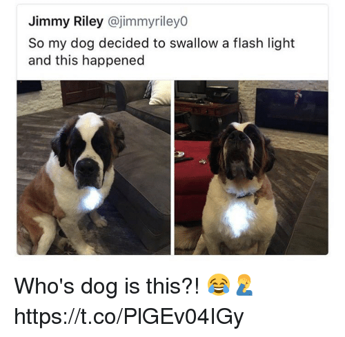 Flash, Dog, and Light: Jimmy Riley @jimmyriley0  So my dog decided to swallow a flash light  and this happened Who's dog is this?! 😂🤦♂️ https://t.co/PlGEv04IGy