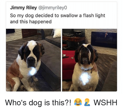 Memes, Wshh, and 🤖: Jimmy Riley @jimmyrileyo  So my dog decided to swallow a flash light  and this happened Who's dog is this?! 😂🤦♂️ WSHH