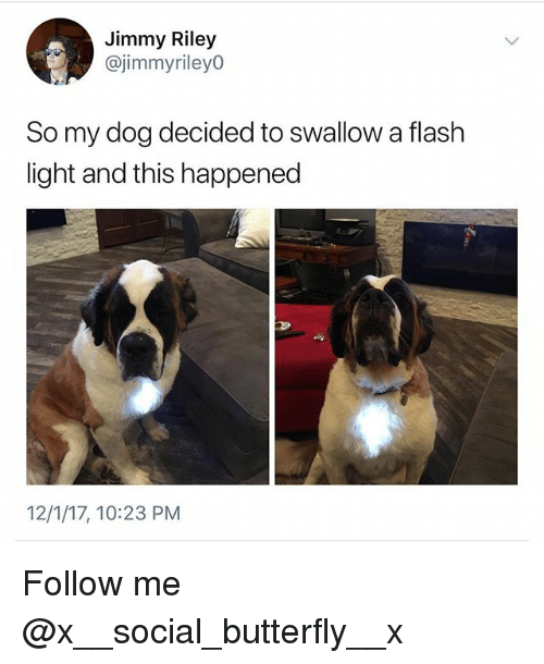 Memes, Butterfly, and 🤖: Jimmy Riley  @jimmyrileyO  So my dog decided to swallow a flash  light and this happened  12/1/17, 10:23 PM Follow me @x__social_butterfly__x