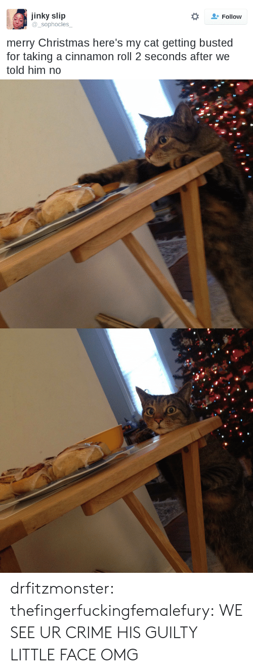 slip: jinky slip  sophocles  Follow  merry Christmas here's my cat getting busted  for taking a cinnamon roll 2 seconds after we  told him no drfitzmonster: thefingerfuckingfemalefury:  WE SEE UR CRIME   HIS GUILTY LITTLE FACE OMG