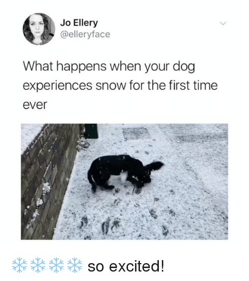 Memes, Snow, and Time: Jo Ellery  elleryface  What happens when your dog  experiences snow for the first time  ever ❄️❄️❄️❄️ so excited!