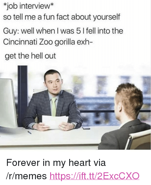 "Job Interview, Memes, and Forever: job interview*  so tell me a fun fact about yourself  Guy: well when I was 5 l fell into the  Cincinnati Zoo gorilla exh-  get the hell out <p>Forever in my heart via /r/memes <a href=""https://ift.tt/2ExcCXO"">https://ift.tt/2ExcCXO</a></p>"