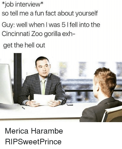 Job Interview, Memes, and Harambe: job interview  so tell me a fun fact about yourself  Guy: well when I was 5 I fell into the  Cincinnati Zoo gorilla exh-  get the hell out Merica Harambe RIPSweetPrince