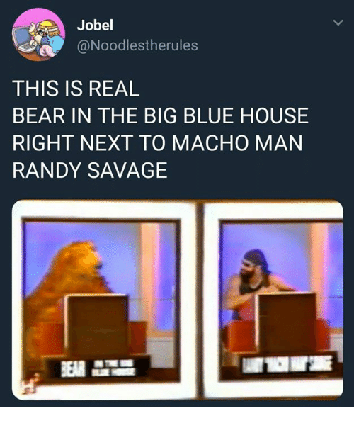 Macho Man Randy Savage: Jobel  @Noodlestherules  THIS IS REAL  BEAR IN THE BIG BLUE HOUSE  RIGHT NEXT TO MACHO MAN  RANDY SAVAGE